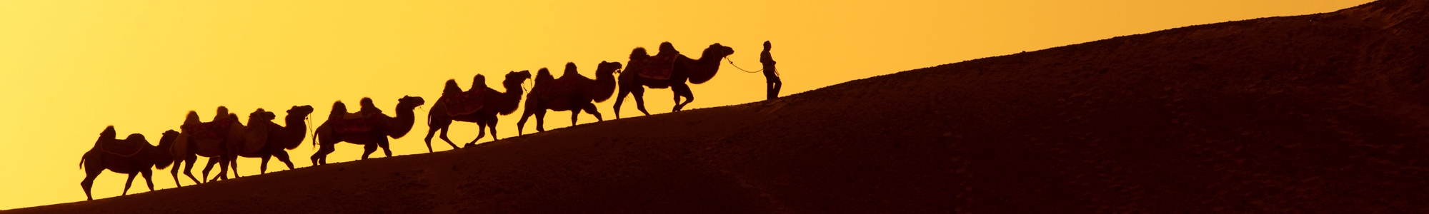 Silk-Road-Camel-China2000x300